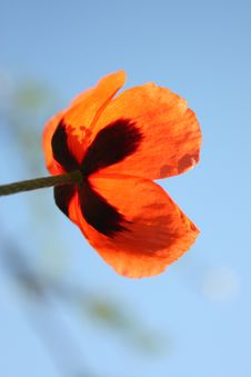 Free Wild Poppies By The Side Of The Roa Stock Photos - 14189393