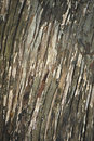Free Abstract Tree Bark Background Stock Photography - 14193812