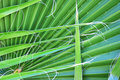 Free Palm Leaves Royalty Free Stock Photo - 14195475