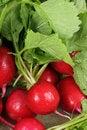Free Fresh Radishes Stock Photos - 14197473