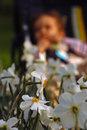 Free Daffodils And Blured Image Of A Child Royalty Free Stock Images - 14199869