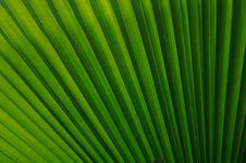 Free Green Leaf Royalty Free Stock Image - 14191286