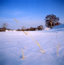Free Ice Grass In The Frozen River Royalty Free Stock Photography - 14191707