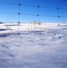 Free Grass In The Snow Field Royalty Free Stock Photo - 14192005