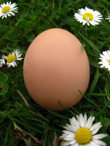 Hen S Egg  In The  Grass