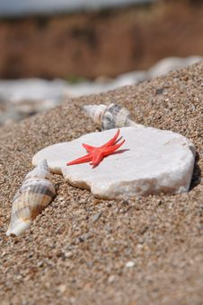 Free Sea Stars On The Rock Between The Two Shells Royalty Free Stock Photos - 14192238