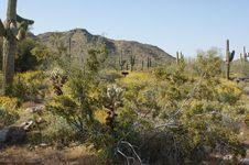 Free Desert Landscape Royalty Free Stock Image - 14192556