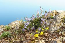 Free Natural Wild Flowers Royalty Free Stock Image - 14193086