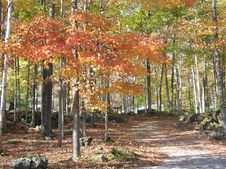 Free Autumn In The Bruce Peninsula Stock Images - 14193484