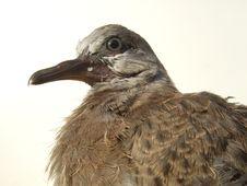 Free Tamed Bird Stock Photos - 14194083