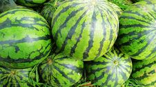 Free Fresh Water Melon Royalty Free Stock Image - 14194326