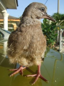 Free Tamed Bird Royalty Free Stock Photography - 14194977