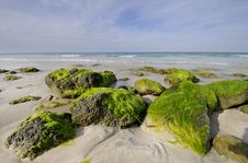 Free Rocky Beach With Seaweed, Santa Maria, Cuba Royalty Free Stock Photos - 14195108