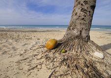 Free Coconut On Tropical Beach Royalty Free Stock Photos - 14195128