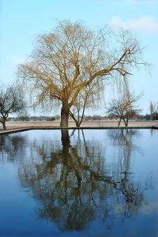 Free Lonely Tree With Reflection In Water Royalty Free Stock Images - 14196509