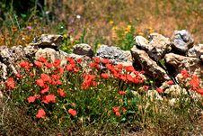 Free Poppy And Wall Royalty Free Stock Photo - 14197285