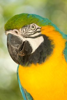 Free Macaw Parrot Royalty Free Stock Photo - 14199805