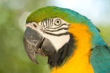 Free Macaw Portrait Stock Photography - 14199832