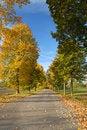 Free Autumn Avenue Stock Photos - 1420823