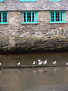 Free Seagulls In Harbour Royalty Free Stock Images - 1424959