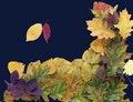 Free Autumn Leaf 10 Stock Photo - 1425570
