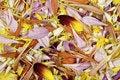 Free Flower Petals Stock Photo - 1425620