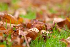 Free Autumn Royalty Free Stock Photography - 1420607