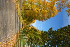Free Autumn Avenue Stock Photos - 1420823