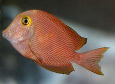 Free Fish Stock Image - 1421001