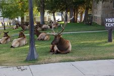 Free Elk Hanging Out At The Visitors Center Royalty Free Stock Photography - 1422107