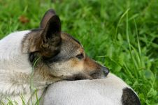 Free Stray Dog Stock Photography - 1422182