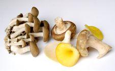 Free Mushroom Selection Stock Photos - 1422193