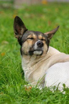 Free Stray Dog Stock Photo - 1422220