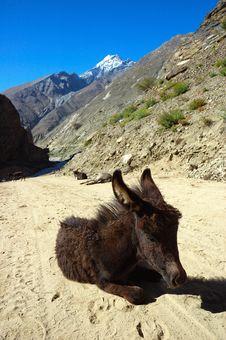 Free Small Donkey Stock Photo - 1422920