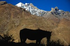 Free Wild Horse Stock Images - 1422944