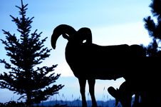 Free Rocky Mountain Bighorn Ram Silhouette Royalty Free Stock Image - 1423336