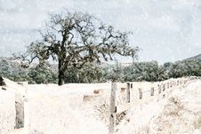 Free Oak Tree And Fence In The Snow Stock Image - 1423341