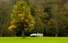 Free Autumn In The Park Stock Photography - 1423612