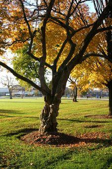 Free Scenic Autumn Time Stock Photo - 1423770