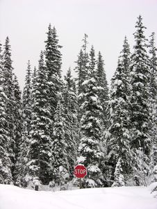 Stop In Winter Stock Photos