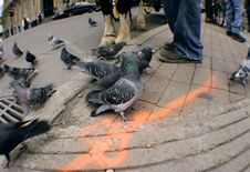 Free Pigeon In A City Royalty Free Stock Image - 1424016