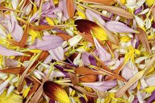 Free Flower Petals Stock Photo - 1425620