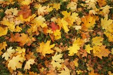 Free Autumn Leaves Lay On A Grass Stock Photography - 1426462