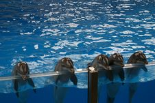 Free Dolphins Greeting The Public Royalty Free Stock Images - 1427159