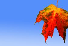 Free Red Autumn Leaf Stock Image - 1427461