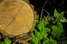 Free Wood Trunk Stock Photos - 1427963