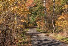 Road Through Autumn Forest Royalty Free Stock Images
