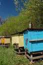 Free Apiary In Springtime Stock Images - 14207924