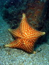Free Starfish Royalty Free Stock Images - 14208089