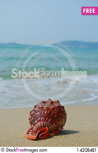 Conch Stock Photo